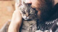 Kissaliitto ja mySafety yhdistävät voimansa kissojen arvostuksen ja hyvinvoinnin parantamiseksi